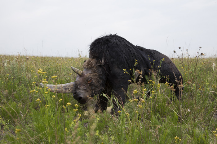 Макет носорога летом