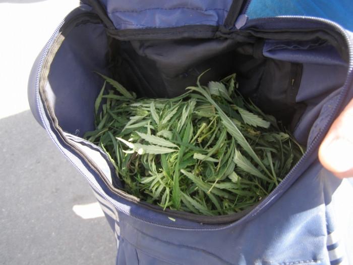 Сколько можно иметь при себе марихуаны конопля листок фото