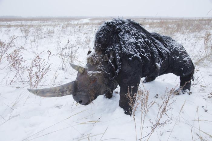 Носорог зимой